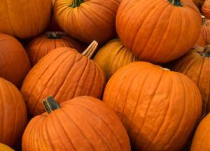 Pumpkin Bread - pumpkin pic