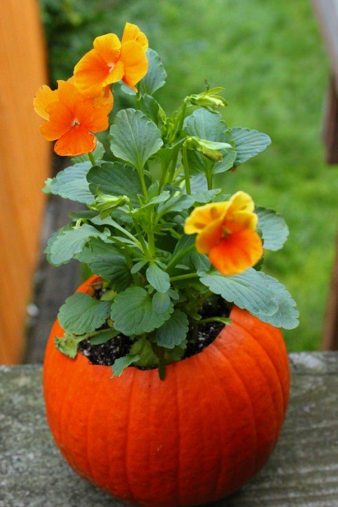 flower pot - Pumpkin Bread