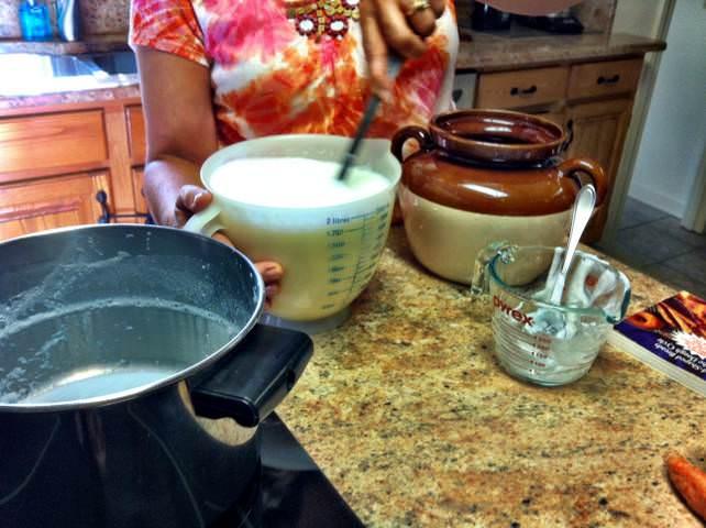 ingredients for Homemade Yogurt