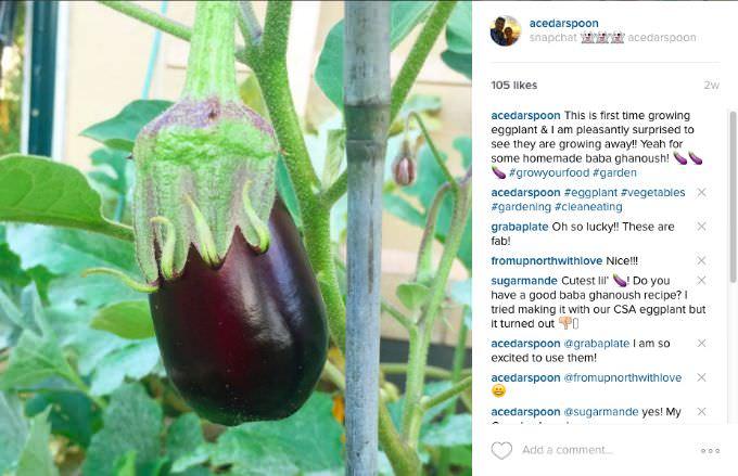 Eggplant A Cedar Spoon