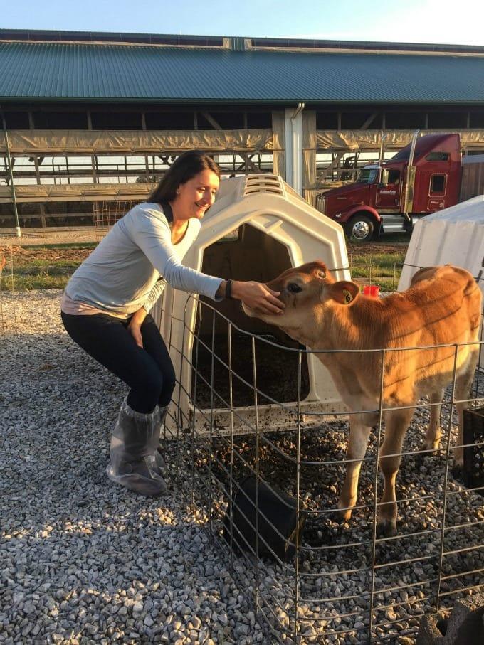 Milking a Baby Calf