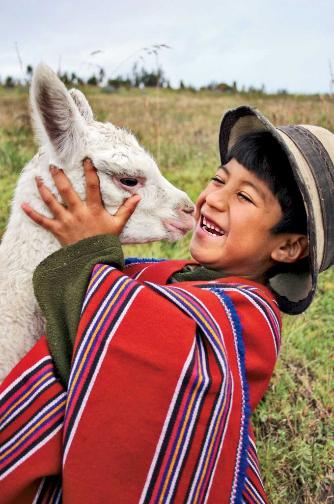 These alpacas are part of a project for the improvement of the p·ramo, in the zone of Guangaje. Unlike other animals, the alpacas do not destroy the p·ramo. The children who appear are sponsored and participated in the PujilÌ Guangaje ADP in Cotopaxi province. No story or summary available. Latin America digital color vertical