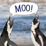 Saving Animals from Extinction Program